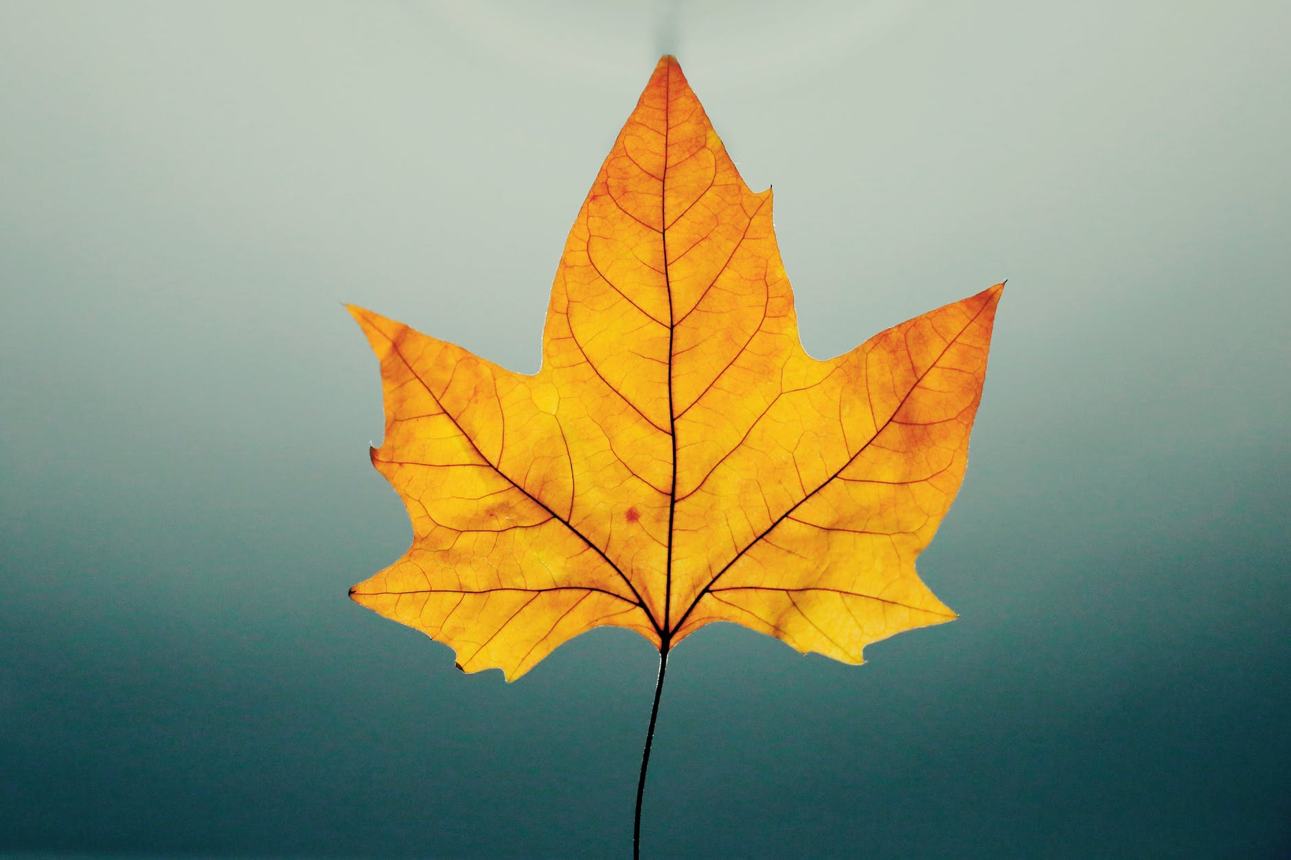 Yellow leaf on green-gray background.